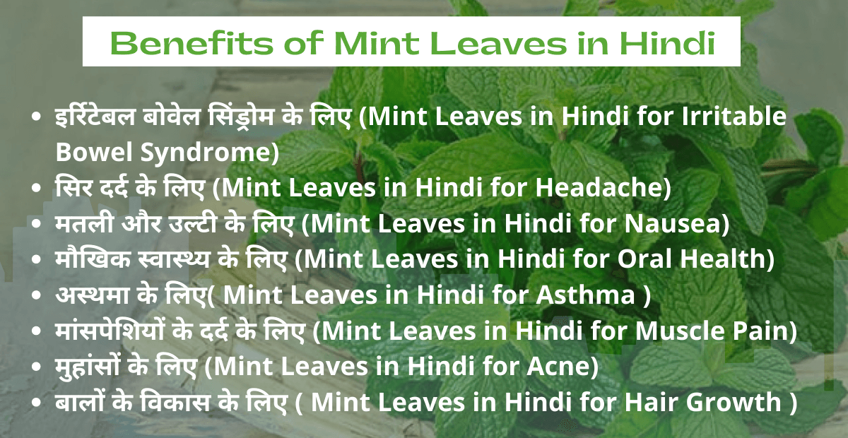 Mint Leaves in Hindi